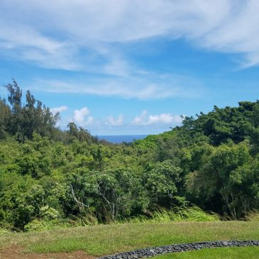 Day 2 . Awaking to Hawaii