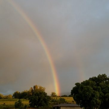 Day 28 . Rainbow Blessings on a Quiet Day