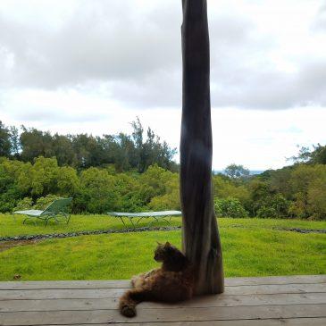 Hawaiian Abundance